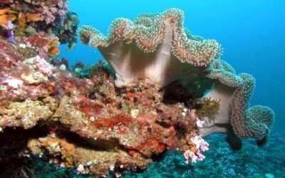 6 luoghi da sogno da visitare alle Maldive